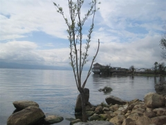 Dali, Erhaisjön